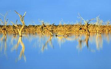 небо, деревья, озеро, природа, отражение, австралия, коряги