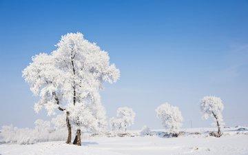 деревья, природа, зима, пейзаж, иней