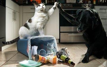 кошка, собака, креатив, мусор
