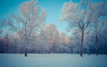 небо, деревья, снег, природа, лес, зима, березы, kamil porembinski