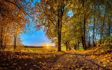 the sky, road, trees, nature, forest, leaves, park, autumn