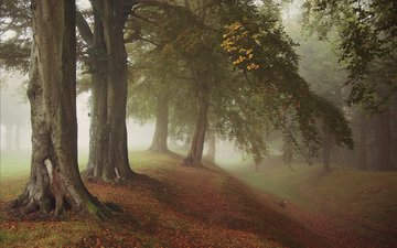 trees, nature, forest, leaves, park, fog, branches, trunks, autumn