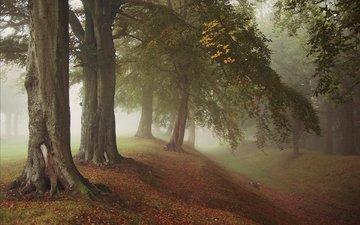 деревья, природа, лес, листья, парк, туман, ветки, стволы, осень
