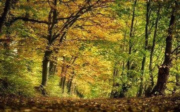 деревья, природа, лес, парк, осень