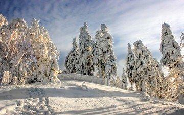 небо, облака, деревья, снег, природа, лес, зима, следы