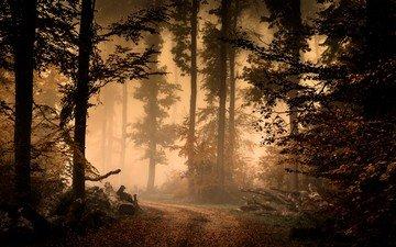 дорога, деревья, природа, лес, туман