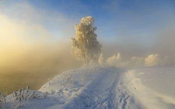дорога, снег, природа, дерево, зима, пейзаж, туман, иней, следы, sergeo