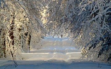 дорога, деревья, снег, природа, лес, зима, ветки, иней