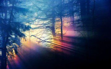 trees, nature, forest, the sun's rays