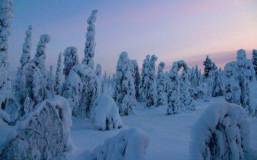 деревья, снег, природа, лес, зима