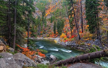 река, природа, лес, осень