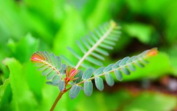 природа, листья, размытость, растение