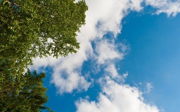 the sky, clouds, trees, leaves, branches