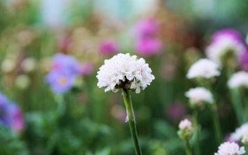 цветение, растения, поле, луг, полевые цветы