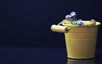 flowers, black background, forget-me-nots, bucket