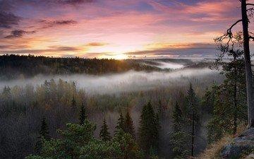 trees, sunrise, forest, landscape, morning, fog, national park, finland