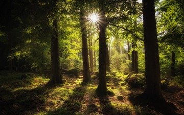 trees, nature, forest, moss, sunlight