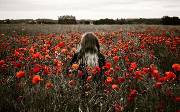 цветы, девушка, поле, красные, маки, модель, спина, волосы