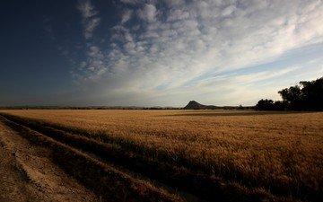 небо, облака, поле, горизонт, пшеница, нива