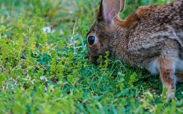 глаза, трава, растения, кролик, заяц