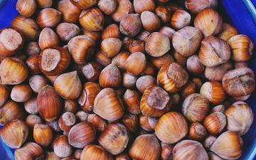 nuts, hazelnuts, hazelnut
