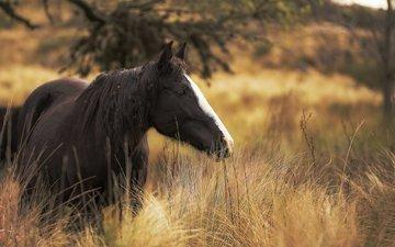 лошадь, трава, поле, конь, грива