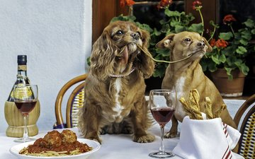 look, wine, dogs, dinner, spaniel, pasta, murdock