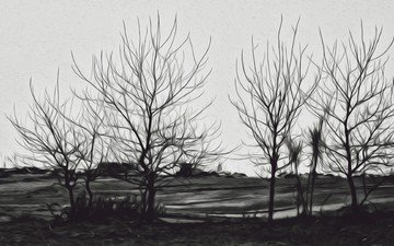 trees, landscape, black and white, silhouettes
