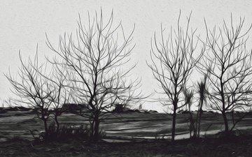 деревья, пейзаж, чёрно-белое, силуэты
