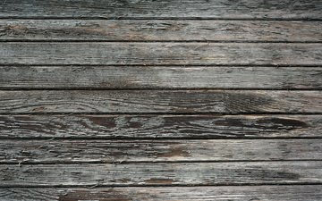 tree, texture, board, wooden surface