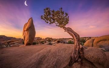 небо, дерево, камни, луна, сша, калифорния, joshua tree national park, национальный парк джошуа-три