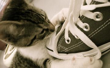cat, muzzle, look, kitty, sneakers, laces