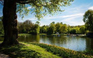 небо, цветы, трава, облака, деревья, озеро, парк, люди