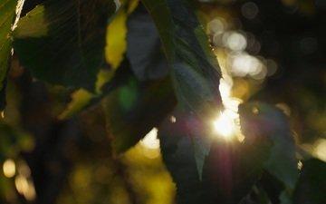leaves, rays, bokeh, sunlight