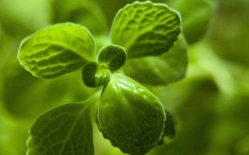 nature, leaves, green, plant, closeup