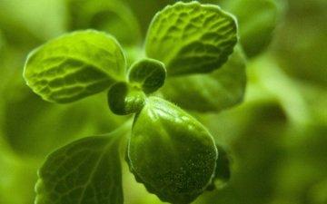 природа, листья, зеленые, растение, крупным планом