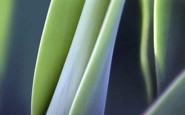 природа, листья, макро, растение