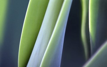 nature, leaves, macro, plant