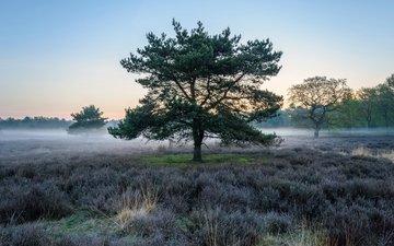 небо, дерево, растения, туман, поле
