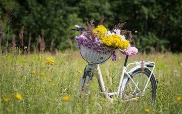 цветы, растения, луг, корзина, полевые цветы, велосипед