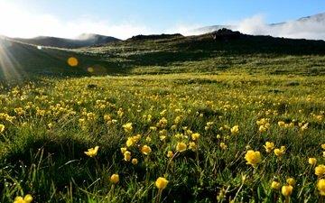 небо, трава, холмы, пейзаж, лето, луг, желтые цветы