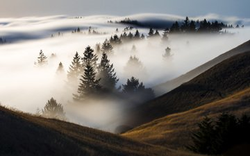 trees, hills, nature, forest, landscape, morning, fog