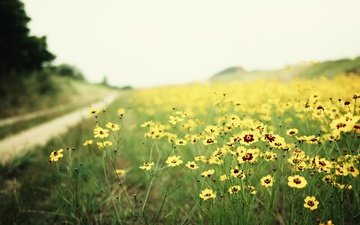 road, flowers, nature, landscape, field, blur, yellow, wildflowers