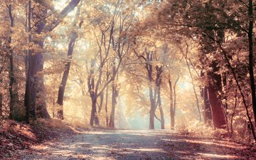 road, trees, nature, leaves, landscape, fog, autumn, the sun's rays