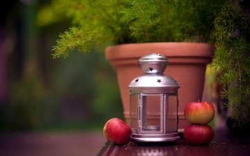 fruit, apples, lantern, plant, candle, pot, flashlight