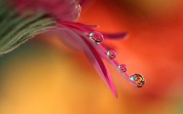 flower, drops, petal