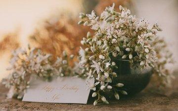 flowers, postcard, congratulations, happy birthday