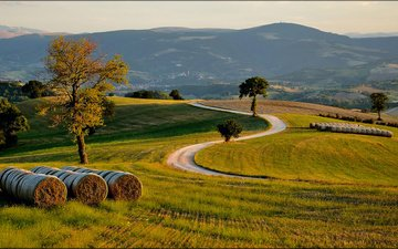 дорога, трава, деревья, холмы, поле, сено, италиа