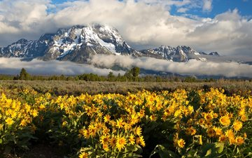 the sky, clouds, mountains, nature, plants, sunflowers, reserve, wyoming, grand teton, yellow flowers