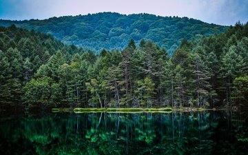 trees, lake, nature, forest, reflection, pond